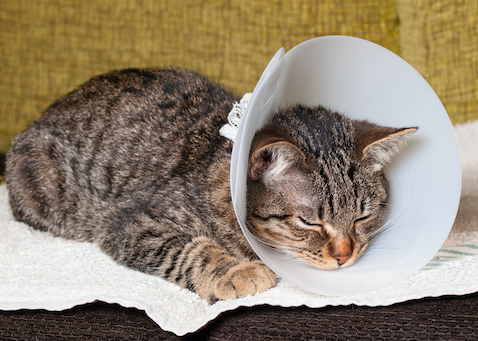 5 Steps for Taking Care of Your Pet After Spay & Neuter ...