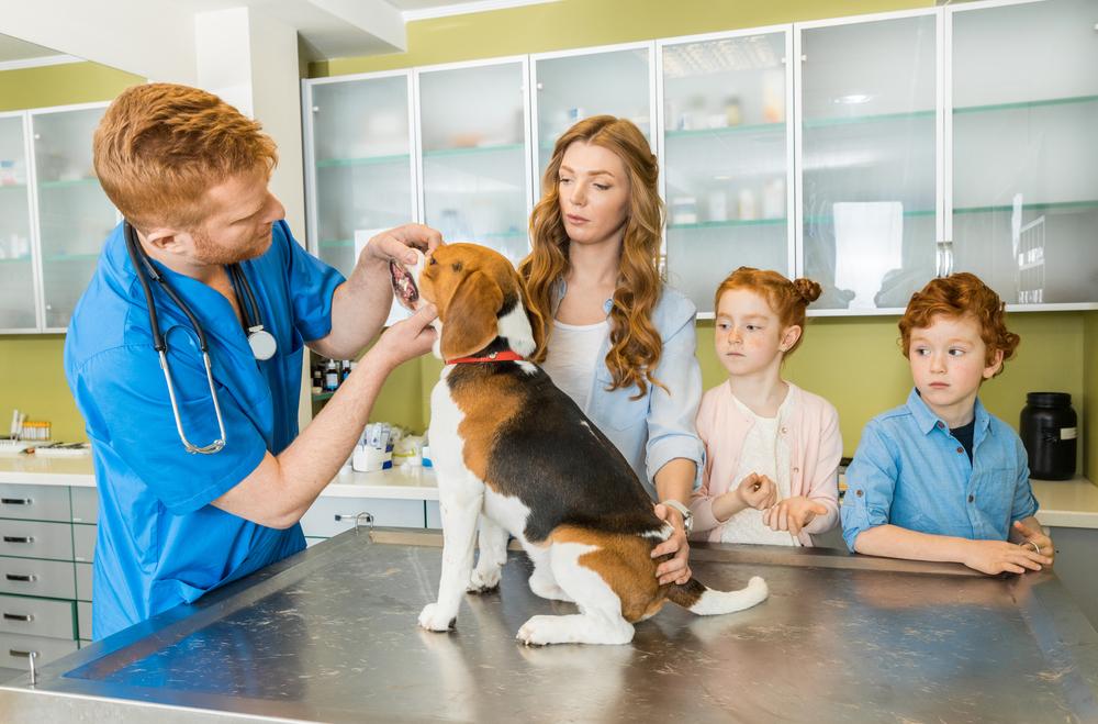 veterinarian-middlefield-veterinary-clinic