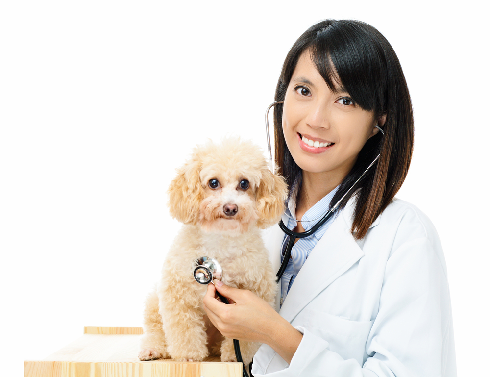 Image result for Qualities Of Good Veterinary Hospital