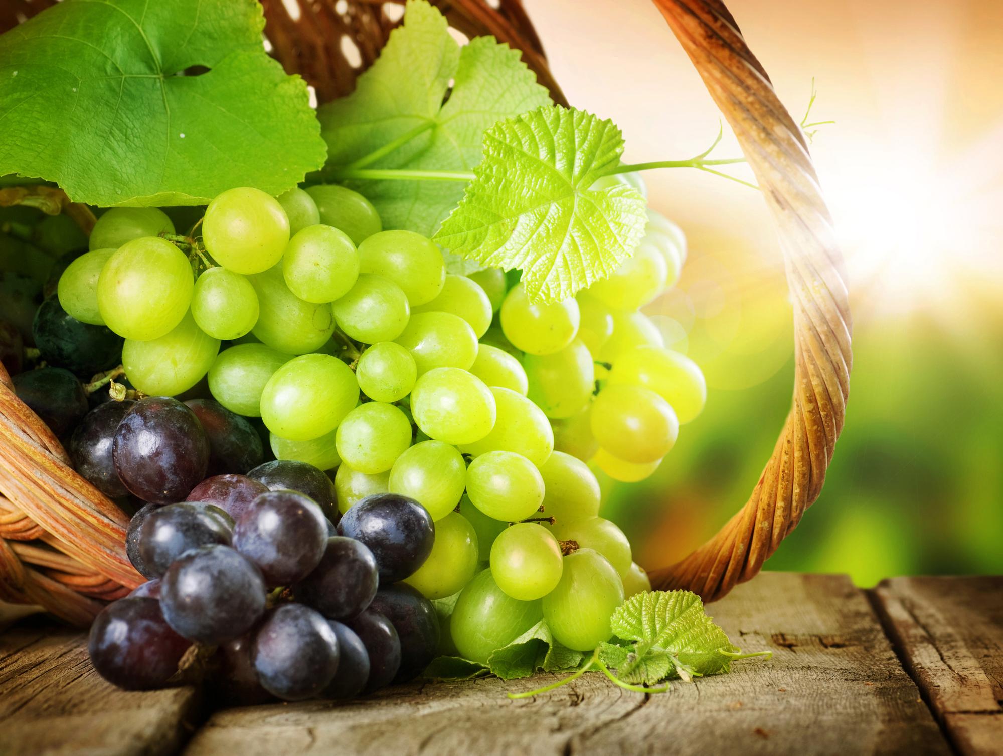 wine florida