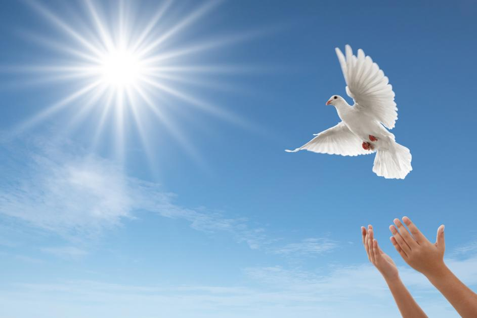 3 Symbols Associated With White Doves A Sign Of Peace White Dove