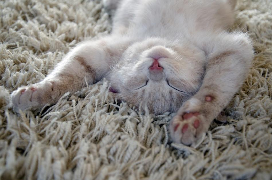 3 Best Carpets For Pet Owners Diamond