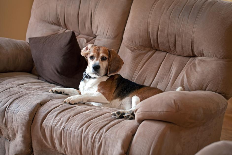 Keep Your Pets Off The Furniture