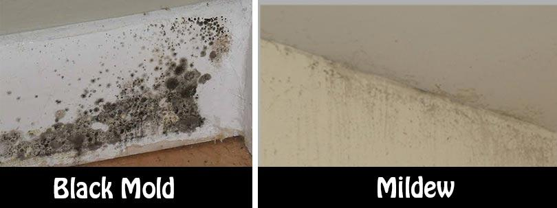 Servicemaster Expert Information Mildew Vs Mold Of Columbia Nearsay
