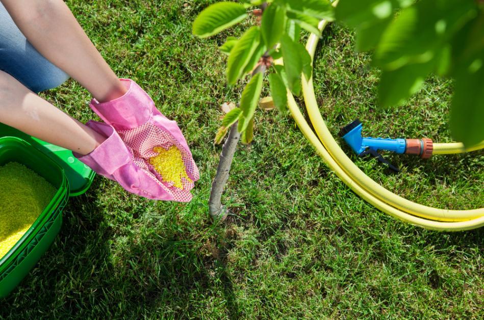 5 Types of Synthetic & Organic Fertilizer - Garden Exchange