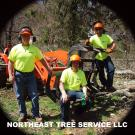 Northeast Tree Service, LLC, Tree Trimming Services, Stump Grinding, Tree Removal, Stratford, Connecticut