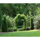 Decorative Creations Inc, Landscapers & Gardeners, Patio Builders, Landscape Design, Matthews, North Carolina