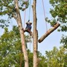 McAllister Tree Service, Tree Service, Services, Cornelia, Georgia