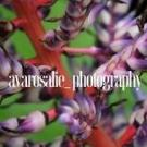 Avarosalie Photography, Portrait Photography, Professional Photographers, Photography, Inver Grove Heights, Minnesota