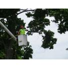 National Tree Care LLC. , Tree Service, Services, Millersport, Ohio