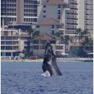 Hawaii Preferred Charters, Yachts & Yacht Operation, Services, Honolulu, Hawaii