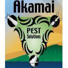 Akamai Pest Solutions, Termite Control, Pest Control and Exterminating, Termite Control, Pahoa, Hawaii
