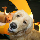 Pet Me Scratch Me, Pet Day Care, Services, Onalaska, Wisconsin