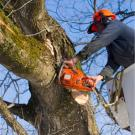 Ross Tree and Contracting Inc., Shrub and Tree Services, Tree Removal, Tree Service, Sudbury, Massachusetts