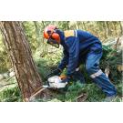 Southwest Ohio Tree Service, Shrub and Tree Services, Services, Loveland, Ohio