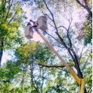 All Seasons Tree Care, Contractors, Shrub and Tree Services, Tree Service, Shrub Oak, New York