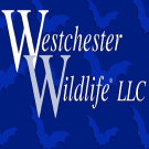 Westchester Wildlife, Pest Control, Animal Control, Brewster, New York