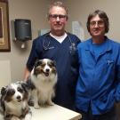 Jacksonville-Cabot Veterinary Clinic , Pet Boarding and Sitting, Veterinary Services, Veterinarians, Cabot, Arkansas
