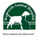 Walworth Animal Hospital, Veterinary Services, Animal Hospitals, Veterinarians, Walworth, New York