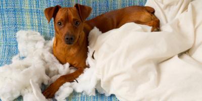 3 Reasons Your Pet Chews Everything, Churchville, New York