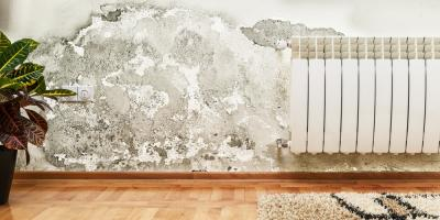 5 Easy Ways to Prevent Mold From Returning, Honolulu, Hawaii