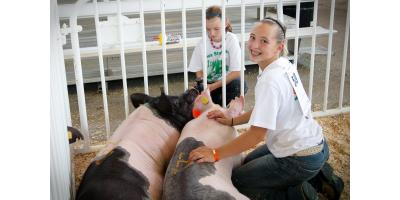 Showing Livestock? How Bloom-N-Secret Can Help Animals Stand Out, Seventy-Six, Iowa