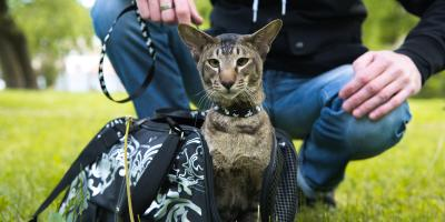 Should Cats Take Walks?, Ewa, Hawaii