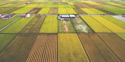 4 FAQ About Crop Insurance, Saltillo, Nebraska