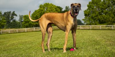 3 Factors to Consider When Buying a Fence for a Dog, Hamptonburgh, New York