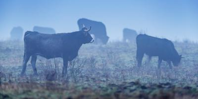 How to Care for Livestock in Winter, Wentzville, Missouri