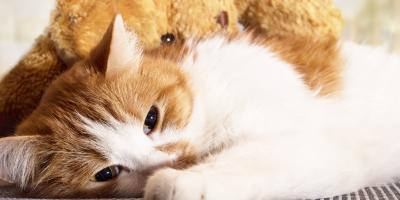 4 Signs Your Cat Is in Pain, Wahiawa, Hawaii