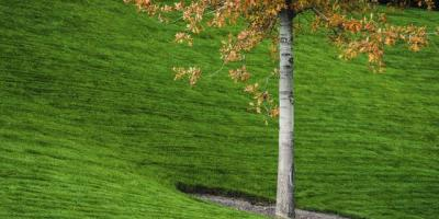 A Lawn Fertilizer Service Lists 3 Steps You Should Take When Fertilizing, Stuarts Draft, Virginia
