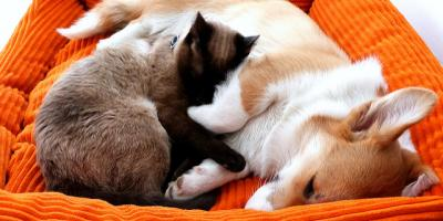 3 questions every pet parent needs to ask about their pet food, Sycamore, Ohio