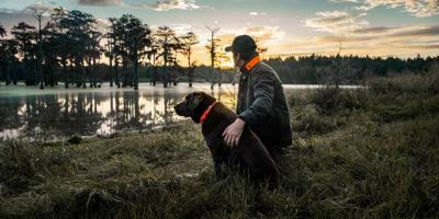 4 Tips for Hiking With Your Dog, Jacksonville East, Florida