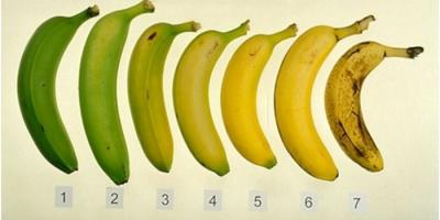 Brown Ripe Bananas: Are They Healthy?, Potomac, Maryland