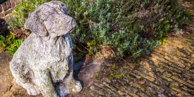 3 Touching Pet Memorial Ideas to Remember Deceased Companions, Springfield, Ohio