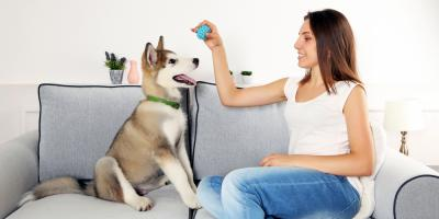 Doggy Day Care Shares 3 Simple Tips for House Training, Churchville, New York