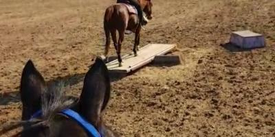 3 Benefits of Working With a Horse Trainer on Agility Courses, Oceanside-Escondido, California