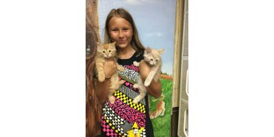 A Brief Guide to Kitten Care, Foley, Alabama