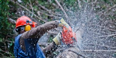 3 Reasons to Never Attempt Tree Removal on Your Own , York, South Carolina