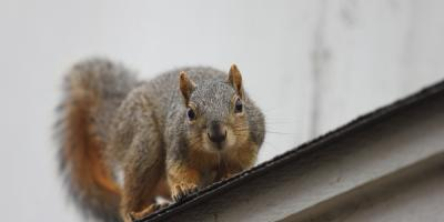 3 Types of Critters That Speed Up the Need for Gutter Repairs, Omaha, Nebraska