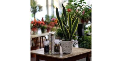 Today's Trendiest Houseplants, Flower Mound, Texas