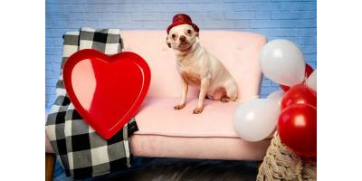 Valentine Pup Pics!, Highland Village, Texas