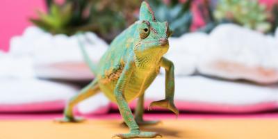 A Beginner's Guide to Chameleon Care, Lincoln, Nebraska