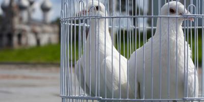 3 Reasons to Release White Doves at a Memorial Service, Covington, Kentucky