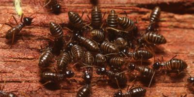 3 Common Questions About Termites, Koolaupoko, Hawaii