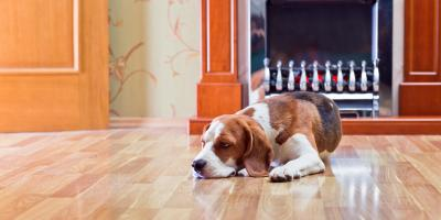 A Pet Owners Guide to Hardwood Floors, Green, Ohio