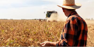 FAQ About Soybean Cyst Nematodes, Adams, Wisconsin