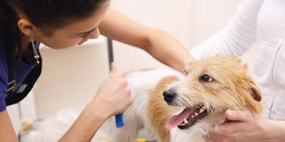 After Pet Grooming School: What to Expect From the Job Market , Philadelphia, PA, Delaware