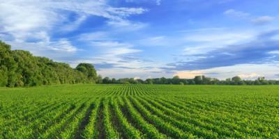 How Crop Insurance Agents Help Design Policies, Beatrice, Nebraska